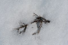 Brown dry twigs covered with white snow, natural background. Top view royalty free stock photos