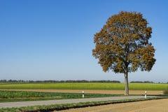 Brown drzewo w krajobrazie w Weil, wzdłuż trasy dzwonił Romantycznego Droga, Niemcy obrazy stock