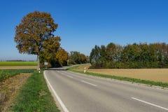 Brown drzewo w krajobrazie w Weil, wzdłuż trasy dzwonił Romantycznego Droga, Niemcy zdjęcia royalty free