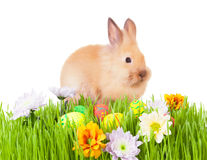 Brown dziecka królik w zielonej trawie z kwiatami i   Zdjęcia Stock