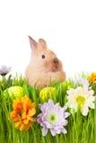 Brown dziecka królik w zielonej trawie z kwiatami i   Zdjęcie Royalty Free