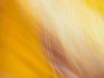 Brown e amarelo Fotos de Stock