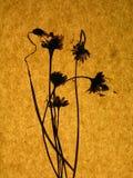 Brown e documento handmade arancione Fotografia Stock