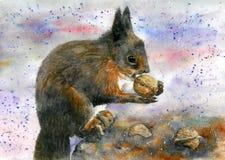 Brown e esquilo vermelho que comem uma noz Ilustra??o da aguarela ilustração stock
