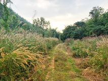 Brown e l'erba porpora di missione in regione selvaggia sistemano invaso di natura Fotografie Stock Libere da Diritti