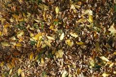 Brown e o amarelo caídos saem na terra Fotografia de Stock Royalty Free