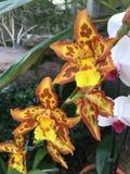 Brown e orquídeas amarelas Imagens de Stock