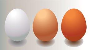 Brown e ovo branco Imagens de Stock Royalty Free