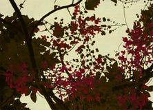 Brown e stampa rossa del fiore su priorità bassa crema Fotografia Stock Libera da Diritti