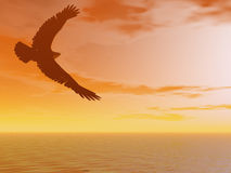 Brown Eagle. In flight towards a sunset Stock Photo
