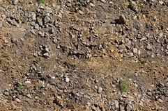 Earth texture, top view, grass grows. Brown earth texture, top view, grass grows royalty free stock image