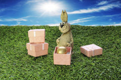 Brown Easter Bunny with pink gift box Royalty Free Stock Images