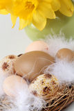 Brown Easter eggs and daffodils Royalty Free Stock Images