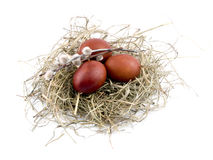 Brown easter eggs and willow branch in nest Royalty Free Stock Photography