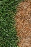 Brown ed erba verde Fotografia Stock