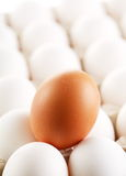 Brown egg. Whites of eggs Royalty Free Stock Photography