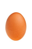 Brown egg. Royalty Free Stock Photo