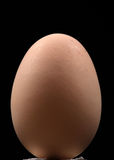 Brown egg. Isolated on black background Royalty Free Stock Photos