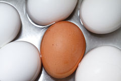 Brown egg. In boiling water with white eggs Royalty Free Stock Photos