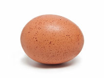 Brown egg. A brown egg a white background Stock Images