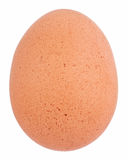 Brown egg. Isolated on a white background Stock Images