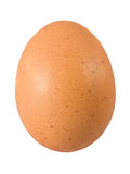Brown egg. One brown fresh egg with dotted shell Stock Photography