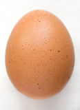 Brown Egg. Closeup of uncracked brown egg stock photo