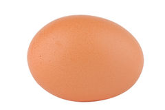 Brown egg Royalty Free Stock Photo