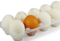 Brown Egg Among White Eggs In Box Royalty Free Stock Image