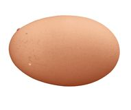 Brown egg background. With fragile shell fresh Royalty Free Stock Images