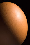 Brown egg closeup Stock Photography