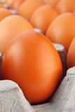 Brown egg closeup Royalty Free Stock Photography