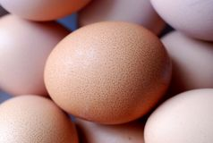 Brown Egg Closeup. A close-up shot of a brown egg, with other fresh eggs in the background Royalty Free Stock Photo