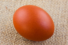 Brown egg Royalty Free Stock Images