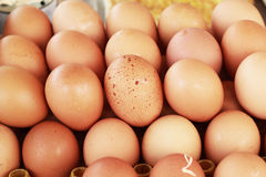 Brown egg in the farm Stock Photo
