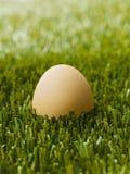 Brown egg Stock Image