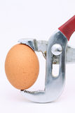 Brown egg held in pliers on white Royalty Free Stock Photos