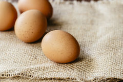 Brown egg on hessian Stock Images