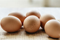 Brown egg on hessian Royalty Free Stock Image
