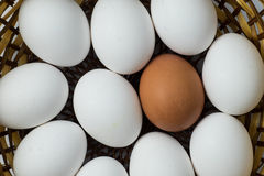 Brown egg integrate with white eggs. Royalty Free Stock Image