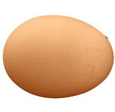 Brown egg isolated. Makes a good frame or background Royalty Free Stock Image