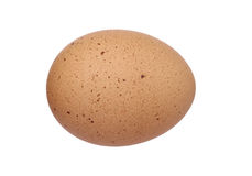 Brown egg. A brown egg isolated on white background Stock Photos