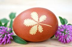Brown egg with leaf pattern and red clover flowers Stock Photos