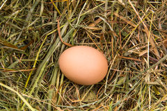 Brown egg lying on a bed of hay Stock Image