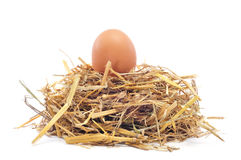 Brown egg in a nest. Closeup of a brown egg in a nest on a white background royalty free stock images