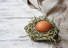 Brown egg in a nest Stock Images
