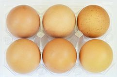 Brown egg packing in tray on white background Stock Images