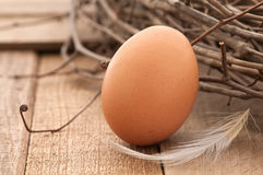 Brown Egg in Rustic Setting with Nest on Wood. Horizontal of one brown egg on rustic boards with a nest and white feather stock images