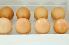 Brown egg stored on tray in refrigerator door Royalty Free Stock Photos