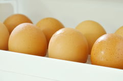 Brown egg stored on tray in refrigerator door Royalty Free Stock Image